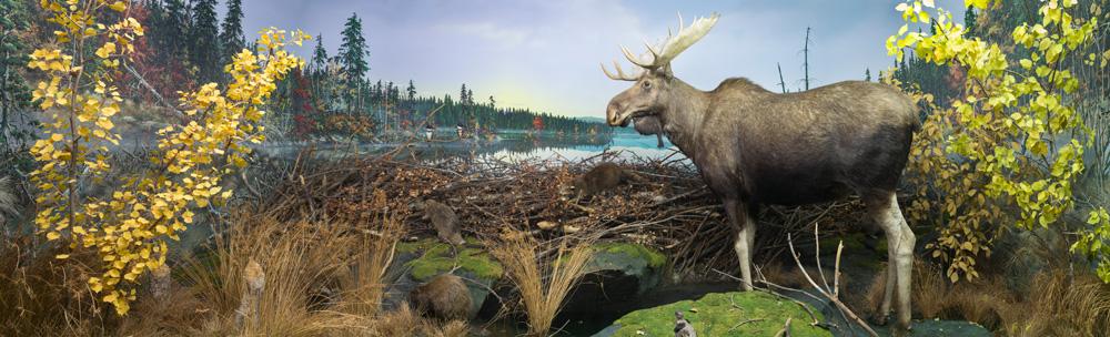 Foresta-boreale