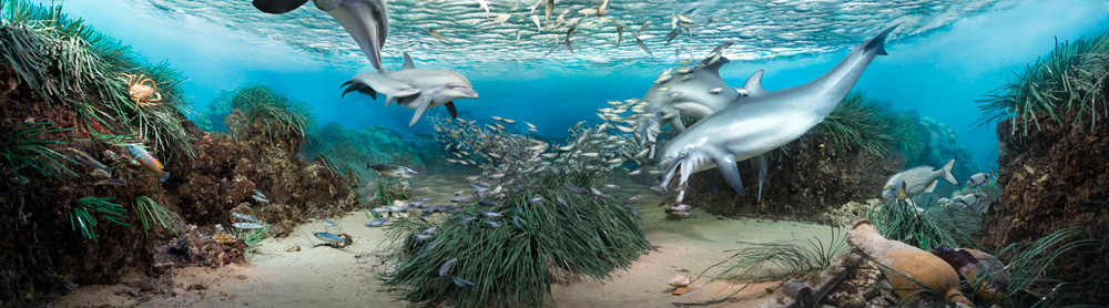 Digital Diorama | Mediterranean Sea